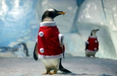 Photos: Animals in Christmas hats and outfits