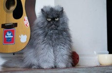 Famous internet cat Colonel Meow dies
