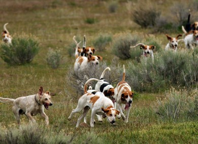 How To Train Pig Hunting Dogs